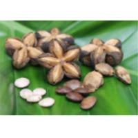 Sachi Seeds