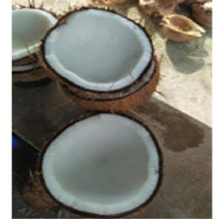 Best Quality Semi Husked Coconut