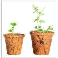 Coir Pot For Planting