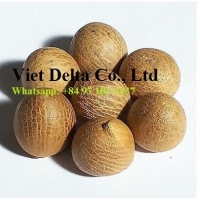 Dried Whole Betel Nut Origin Vietnam