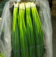 title='Green Spring Onion'