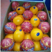 Egyptian Mandarins