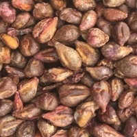 Grapes Seeds