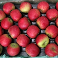 Cripps Red Apples