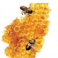 Honey 100% Natural Pure Honey