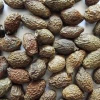 Malva Nuts Benefits