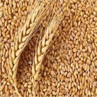 title='Wheat'