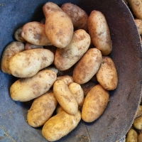 Egyptian Potatoes