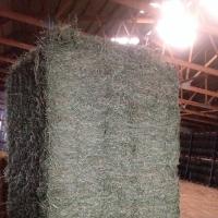 Pure Alfalfa Hay