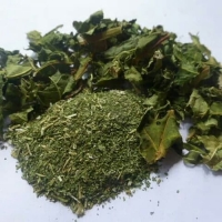 Papaya Leaf Dried Indonesia Origin