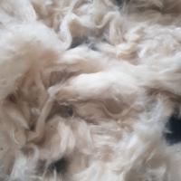 Kapok Fiber (raw Cotton) Indonesia Origin