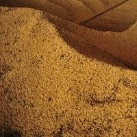 Premium Quality Soybean