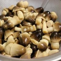 High Quality Canned Mushroom