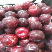 Fresh Plum Fruits
