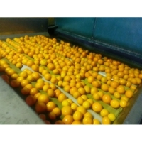 Fresh Oranges, Valencia Orange, Navel Orange
