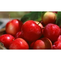 Red Delicious Apple, Royal Gala Apple, Others