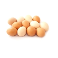100 % Chicken Poultry Broiler Eggs