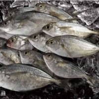 Good Quality Of Butterfish
