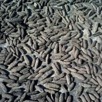 High Quality Dried Sea Cucumber