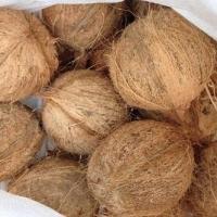 Semi Husked Coconuts,  Husked Coconuts