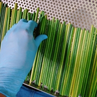 title='Grass Straws For Eu Market 2020'