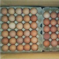 title='Chicken Egg'