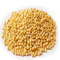 Non GMO Organic Soyabean