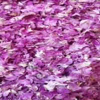 Pink Rose Petals Dry