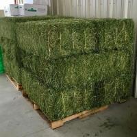 Cheap Alfafa Hay For Animal Feeding