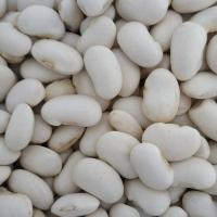 White Kidney Beans - Bandolya Variety