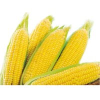 Super Gem Sweet Corn (Hybrid) Seeds