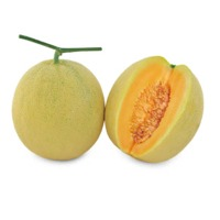 Rumba Melon (Hybrid) Seeds