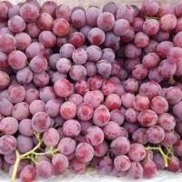 Fresh Sweet Grapes