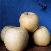 Organic Yellow Fuji Apple
