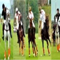 Polo Equipment & Accessories