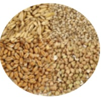 Other Grains and Cereals