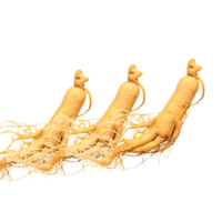 High Quality Ginseng Root Extract