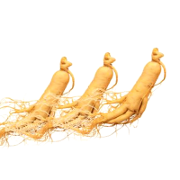 Chinese Panax Ginseng Root Extract