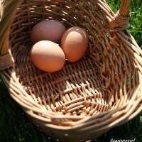 Rattan Basket And Egg Basket