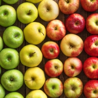 Gala Apple : Manufacturers, Suppliers, Wholesalers and