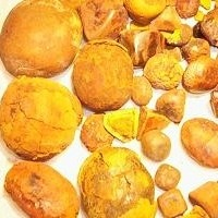 Ox Or Cow Gallstones