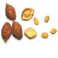 Peach Seed (kernel)