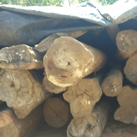 Red Sanders Wood Logs