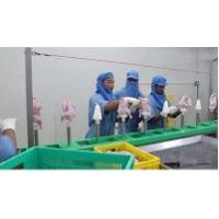 SS Poultry Deboning Conveyor