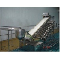 SS PUD Shrimp Washing and Grading Conveyor