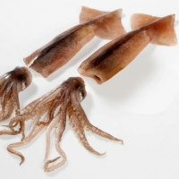 Illex Squid