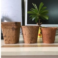 Coir Pots Coir Baskets