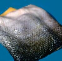 Dried Salmon Skin