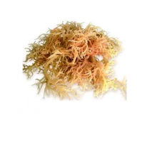 White Seaweed Sea Moss For Food, Drink