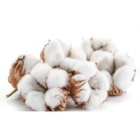Indian Fresh Cotton